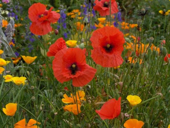 136 Flowers