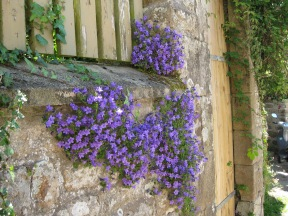 Flowers growing on an old stone wall