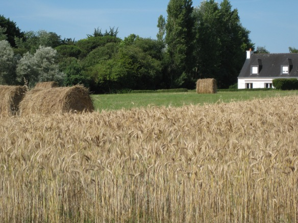 Hay! Hey! (That's for my brother)