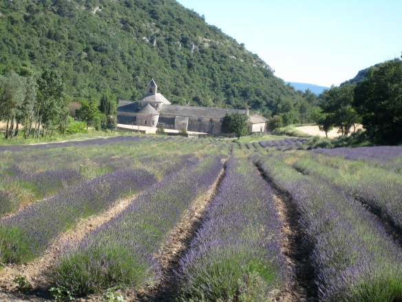 Another view of the Abbey, with lavender fields