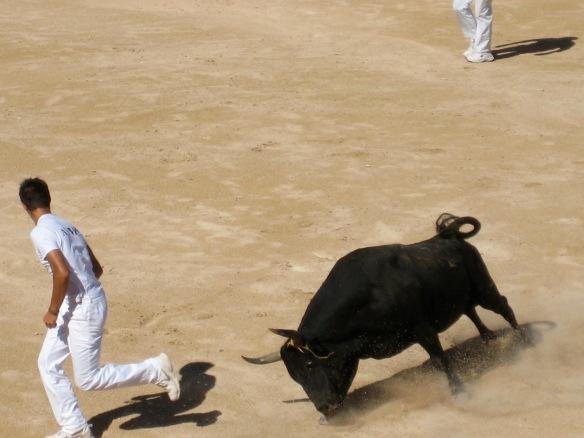 469 Mad bull