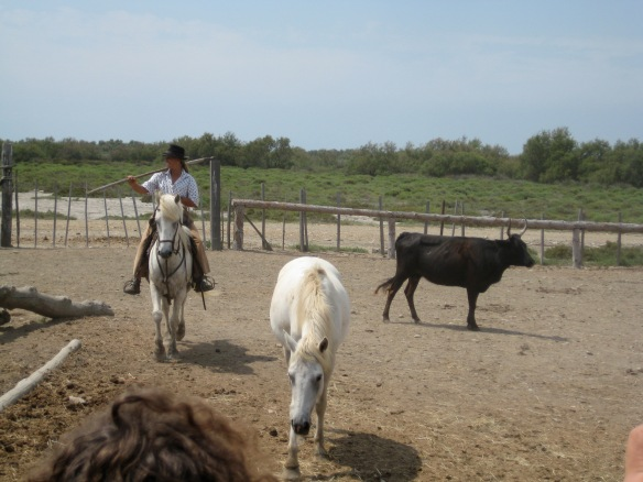 A Guardienne (French Cowgirl) and her herd. This was pretty cool.