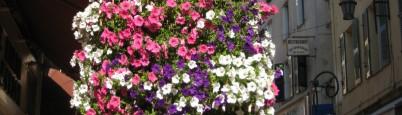 cropped-032-healthy-petunias-partout.jpg
