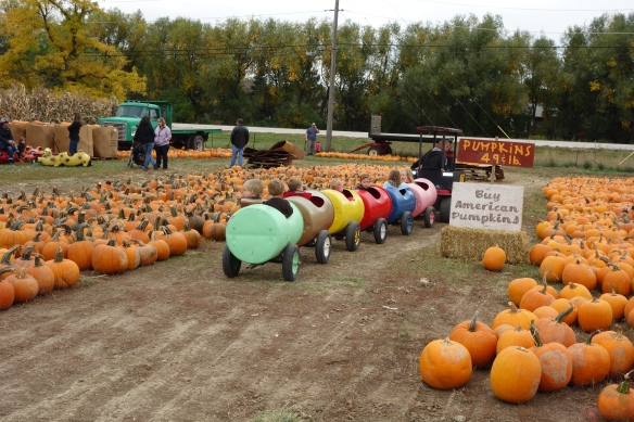 Pumpkin patch in Longmont, Colorado