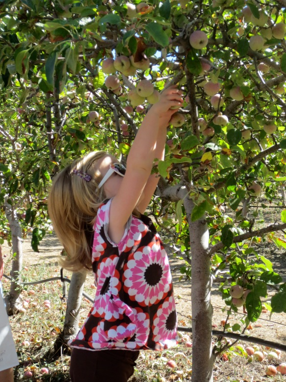 Visiting an apple orchard in Julian, California